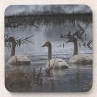 Stormy Swans Beverage Coaster
