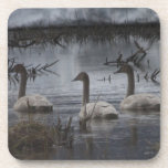 Stormy Swans Coaster