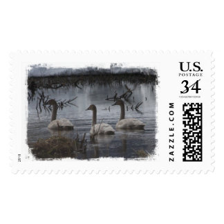 Stormy Swans Postage