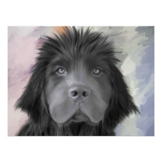 Stormy the Newfoundland Poster