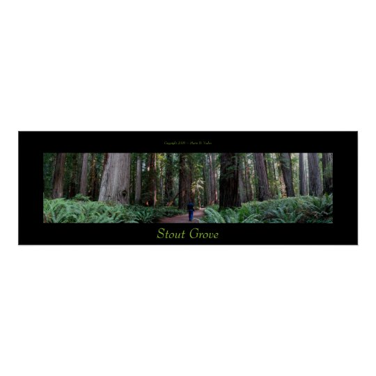 Stout Grove Redwood Trees Poster