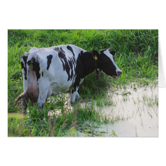 Straggled cow greeting card
