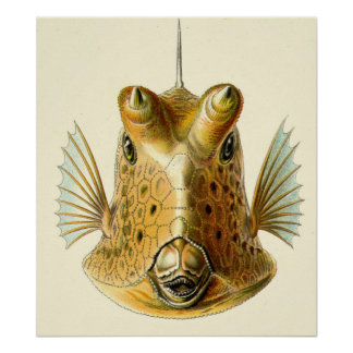 Strange Horned Fish Posters
