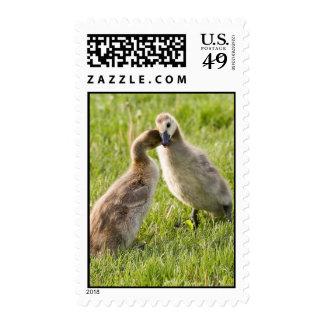 Stranglehold Stamps