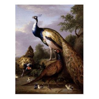 STRANOVER, Tobias birds peacock animals vintage Postcard