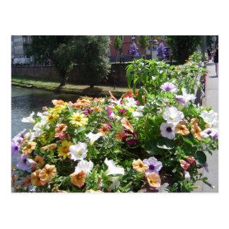Strasbourg by day, flowers