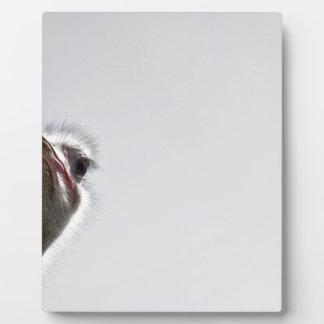 strauss-101 placa de madera
