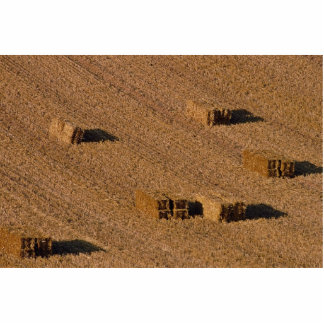 Straw bales in field photo cut out