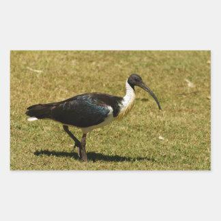 Straw-necked Ibis Rectangular Sticker