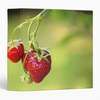Strawberries 3 Ring Binder