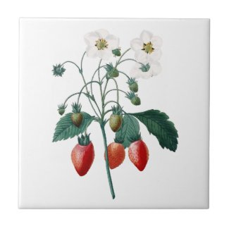 Strawberries Redoute Botanical Ceramic Tile