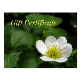 Strawberry Blossom Gift Certificate Postcard