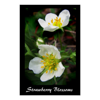 Strawberry Blossoms Posters