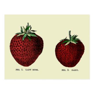 Strawberry Botanicals Post Card