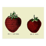 Strawberry Botanicals Postcard