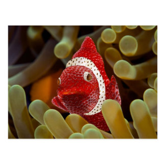 strawberry fish postcard