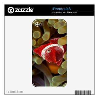 strawberry fish skins for iPhone 4S