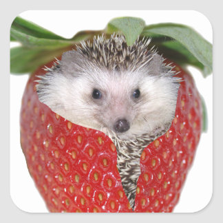 Strawberry Hedgie Square Sticker