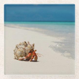 Strawberry Hermit Crab   Coenobita Perlatus Glass Coaster