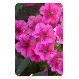 Strawberry Pink Veined Petunias Rectangular Photo Magnet