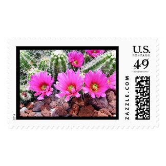 Strawberry Pitaya Cactus Blooms Stamps