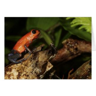 Strawberry Poison-dart frog (Dendrobates 2 Card