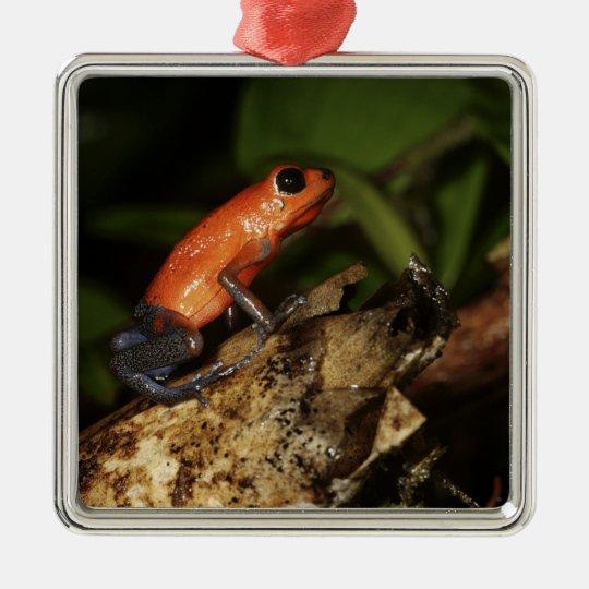 Strawberry Poison-dart frog (Dendrobates 2 Metal Ornament