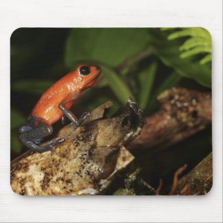 Strawberry Poison-dart frog (Dendrobates 2 Mouse Pad