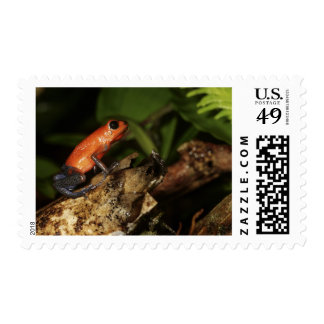 Strawberry Poison-dart frog (Dendrobates 2 Postage
