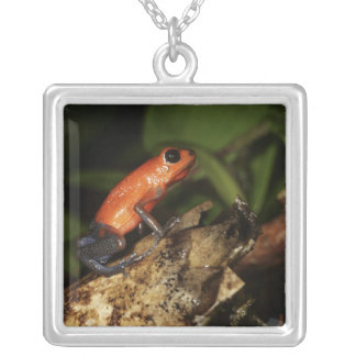 Strawberry Poison-dart frog (Dendrobates 2 Square Pendant Necklace