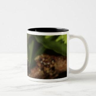 Strawberry Poison-dart frog (Dendrobates 2 Two-Tone Coffee Mug
