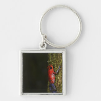 Strawberry Poison-dart frog (Dendrobates Silver-Colored Square Keychain