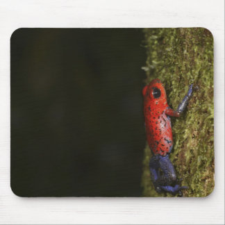 Strawberry Poison-dart frog (Dendrobates Mouse Pad