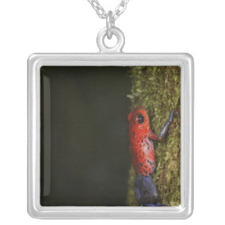 Strawberry Poison-dart frog (Dendrobates Square Pendant Necklace