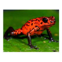 Strawberry poison-dart frog postcard