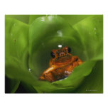 Strawberry poison frog hiding in leaves poster