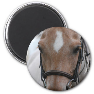 Strawberry Roan Horse  Magnet Magnet