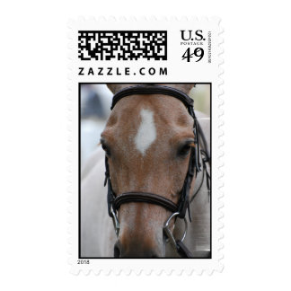 Strawberry Roan Horse Postage Stamp