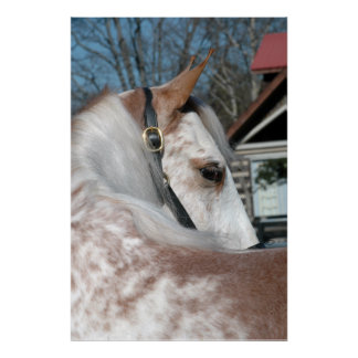 Strawberry Roan Walking Horse Poster