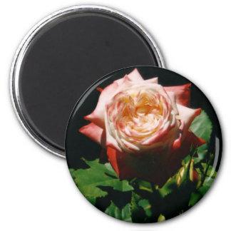 Strawberry Rose Magnet