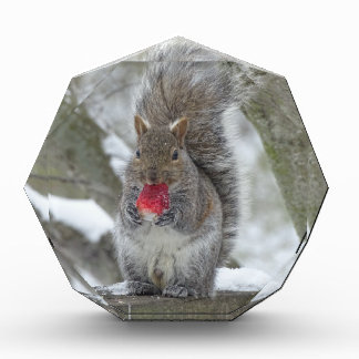 Strawberry squirrel award