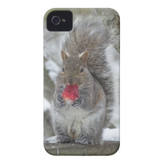 Strawberry squirrel iPhone 4 case