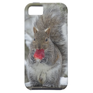Strawberry squirrel iPhone SE/5/5s case