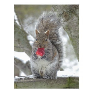 Strawberry squirrel letterhead
