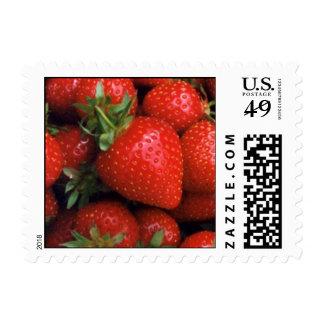 Strawberry Stamp