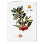 Strawberry tree (Arbutus unedo) Card