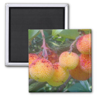 Strawberry Tree Fruit Magnet