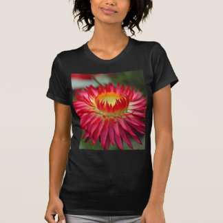 Strawflower (Xerochrysum bracteatum) T-Shirt