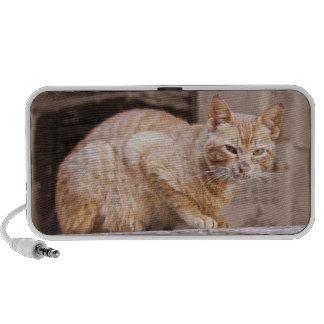 Stray cat in Fes medina, Morocco 2 Portable Speaker