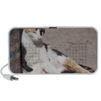Stray cat in Fes medina, Morocco Mini Speaker